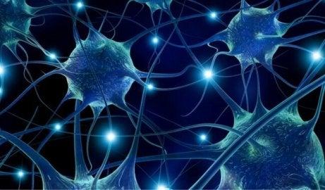 фісташки запобігають нейродегенеративним проблемам