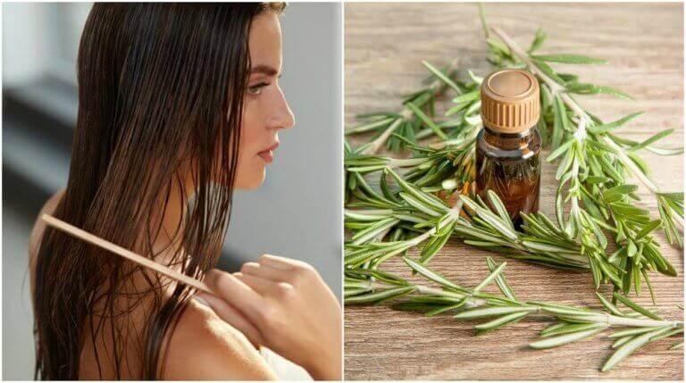 5 корисних переваг розмарину для волосся