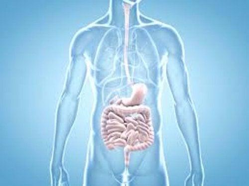збої у роботі кишківника можуть свідчити про рак