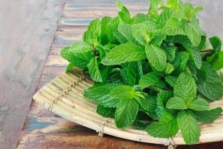 Домашні засоби для здоров'я із листя м'яти