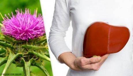 лікування жирної печінки розторопшею