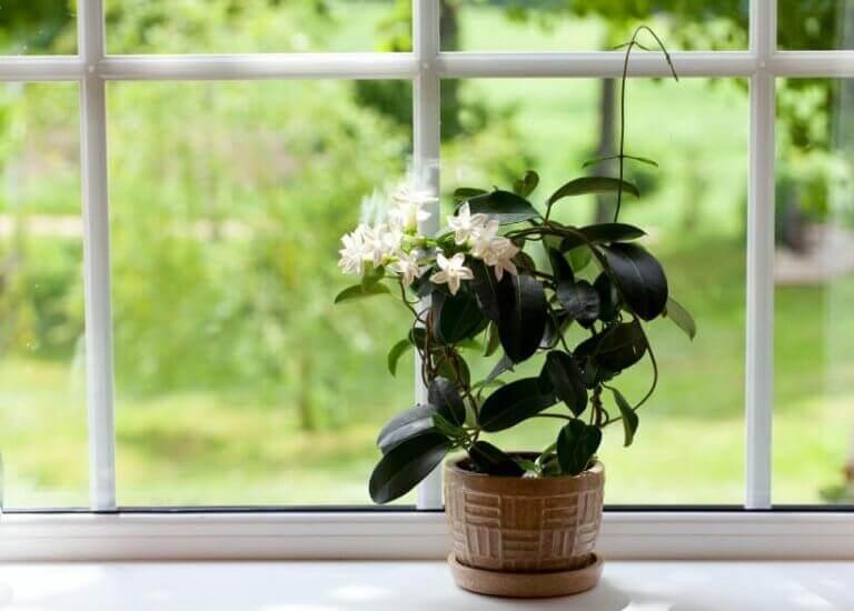 очистити листя кімнатних рослин