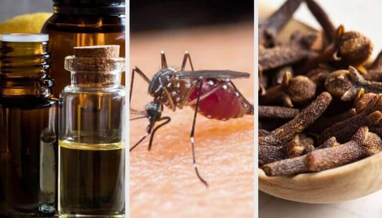 9 натуральних ароматів для відлякування комарів