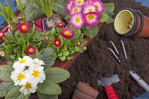 10 рослин, які можна вирощувати у домашньому саду