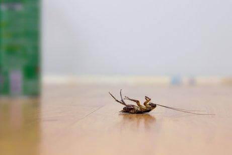Чотири способи позбутися тарганів без використання інсектицидів