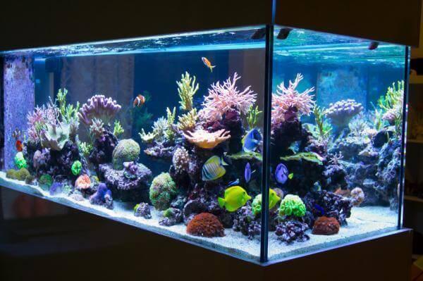 Рекомендації для чищення акваріуму