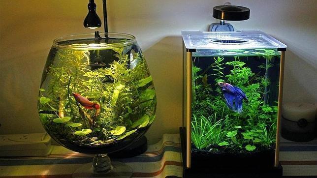 Найкращий спосіб чищення акваріуму