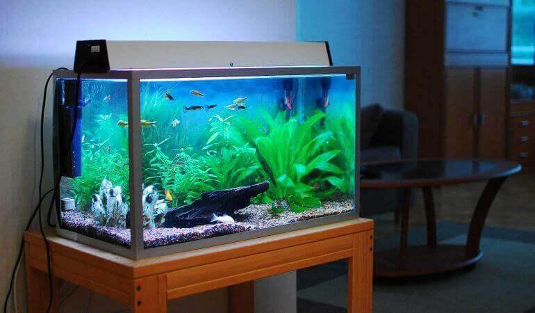 Що потрібно, щоб почистити акваріум?