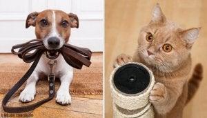 Яка домашня тварина вам підійде найбільше?