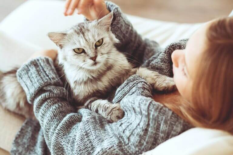 кіт як позитивна домашня тварина