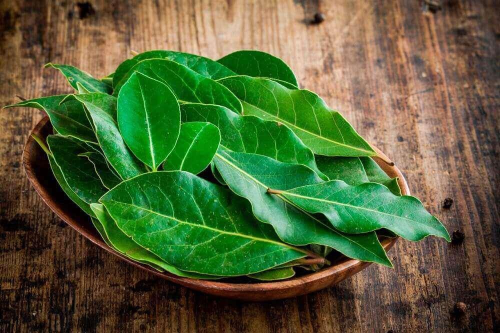 лаврове листя від мокротиння