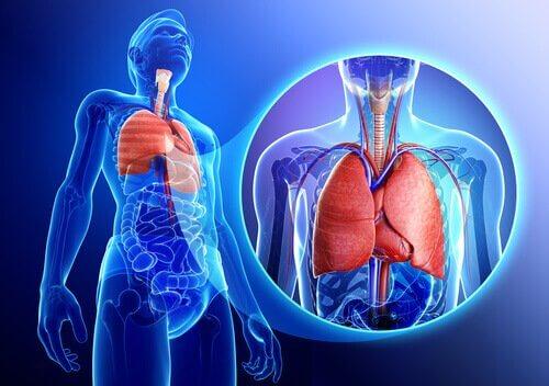 Лавровий лист позитивно позначається на дихальній системі