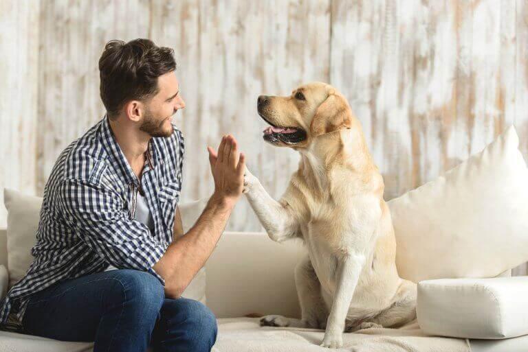 собака як домашня тварина