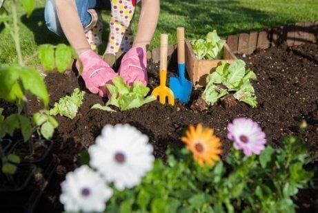 7 способів використання оцту в саду