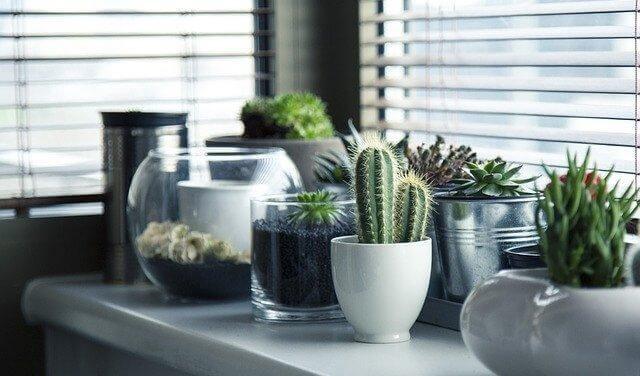 5 чудових ідей, як посадити кактус вдома