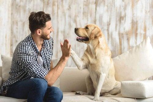 Переваги утримання домашньої тварини