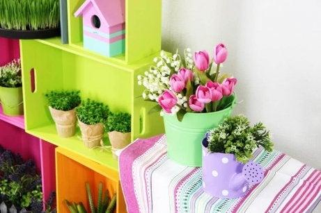 барвисті квіти