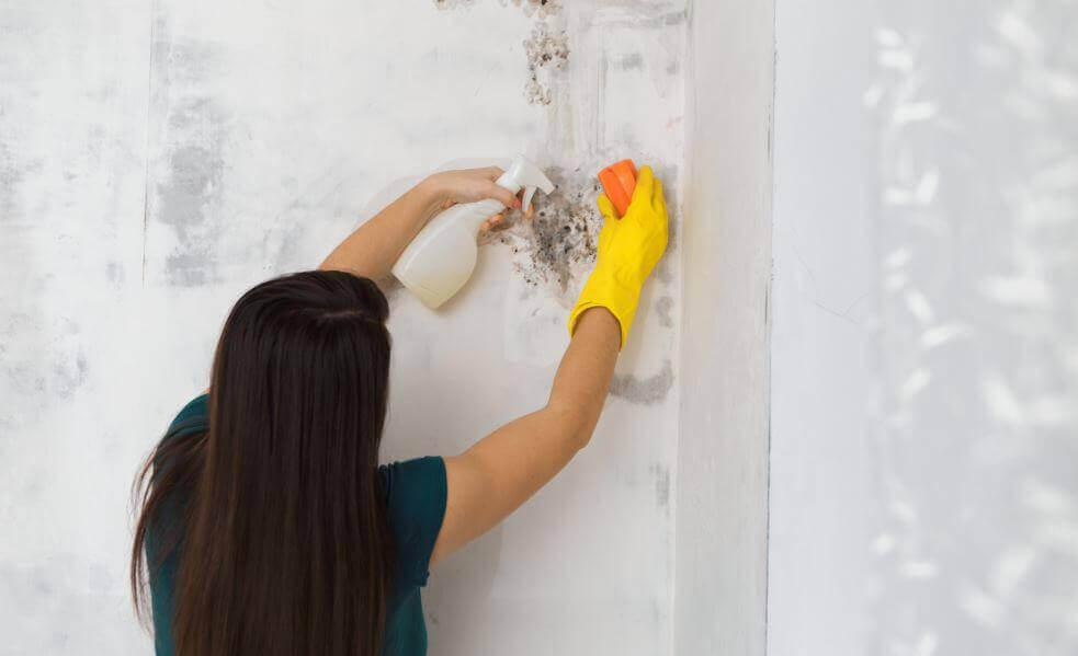 Як видалити плісняву в будинку