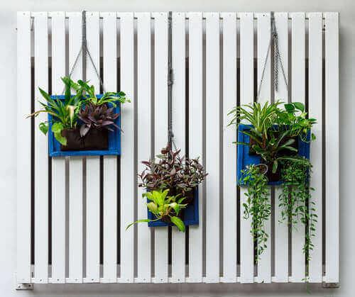 як зробити вертикальний сад