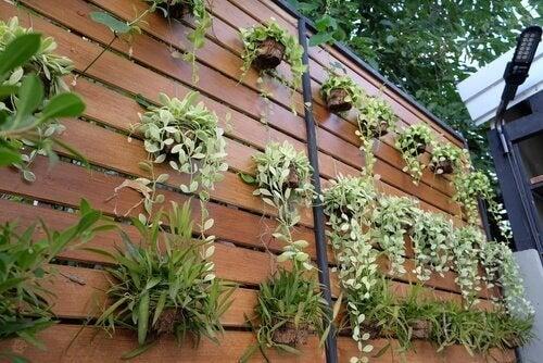 Ідеї для перетворення звичайної стіни на вертикальний сад