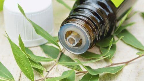 олія чайного дерева для усунення симптомів бактеріального вагінозу