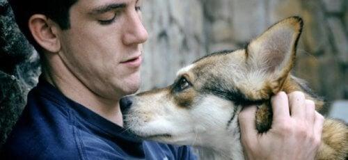 собака та зоотерапія допоможуть подолати сум за домівкою