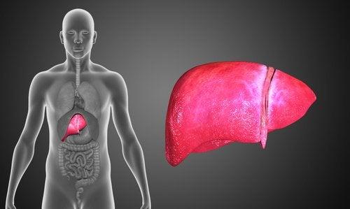 куркума покращує роботу печінки