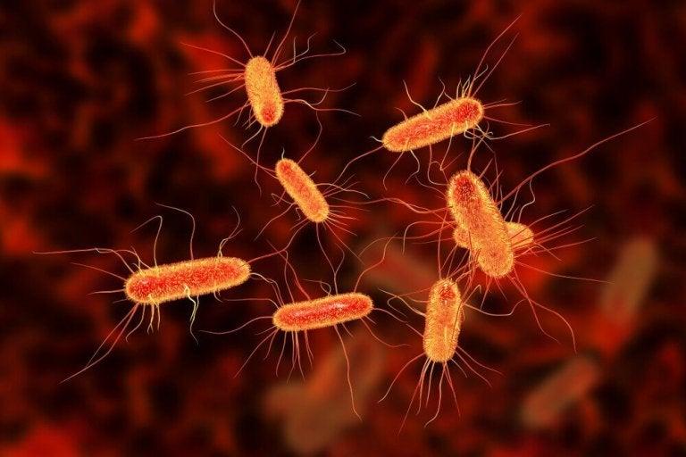 Лікування кишкових інфекцій за допомогою натуральних засобів