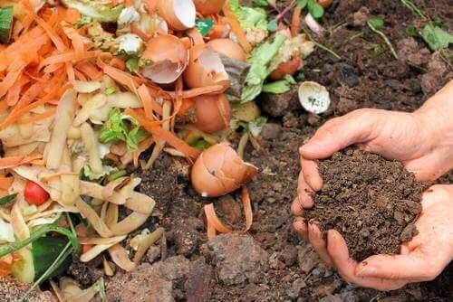 5 засобів, щоб зробити натуральний компост вдома