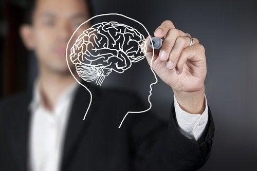 Вчені виявили частину мозку, яка стає зрілою у 36 років