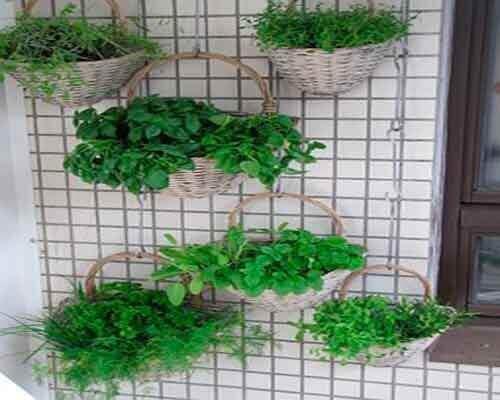 як зробити висячий сад