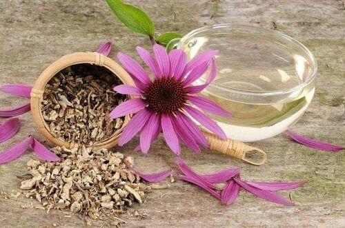 Чай з ехінацеї для очищення лімфатичної системи