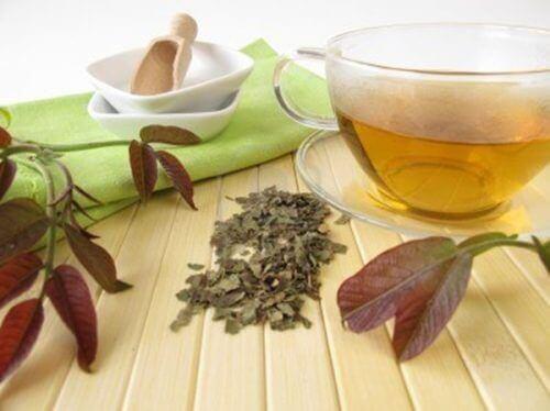 Чай з листя волоського горіха для очищення лімфатичної системи