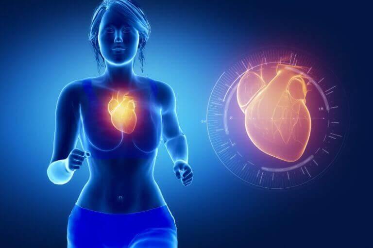 підтримує серцево-судинну систему