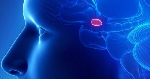 шишкоподібна залоза регулює внутрішні цикли