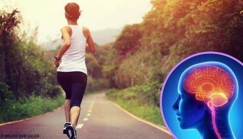 Якщо не займатися спортом, це може зашкодити мозку