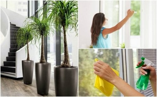 6 способів поліпшити якість повітря у вашій оселі