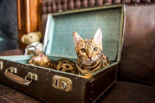 будиночки для песиків та котиків