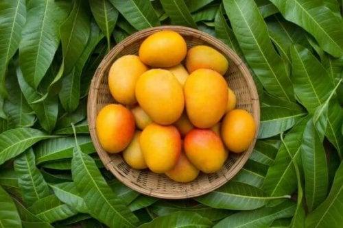 Манго від закрепів: переваги та способи приготування