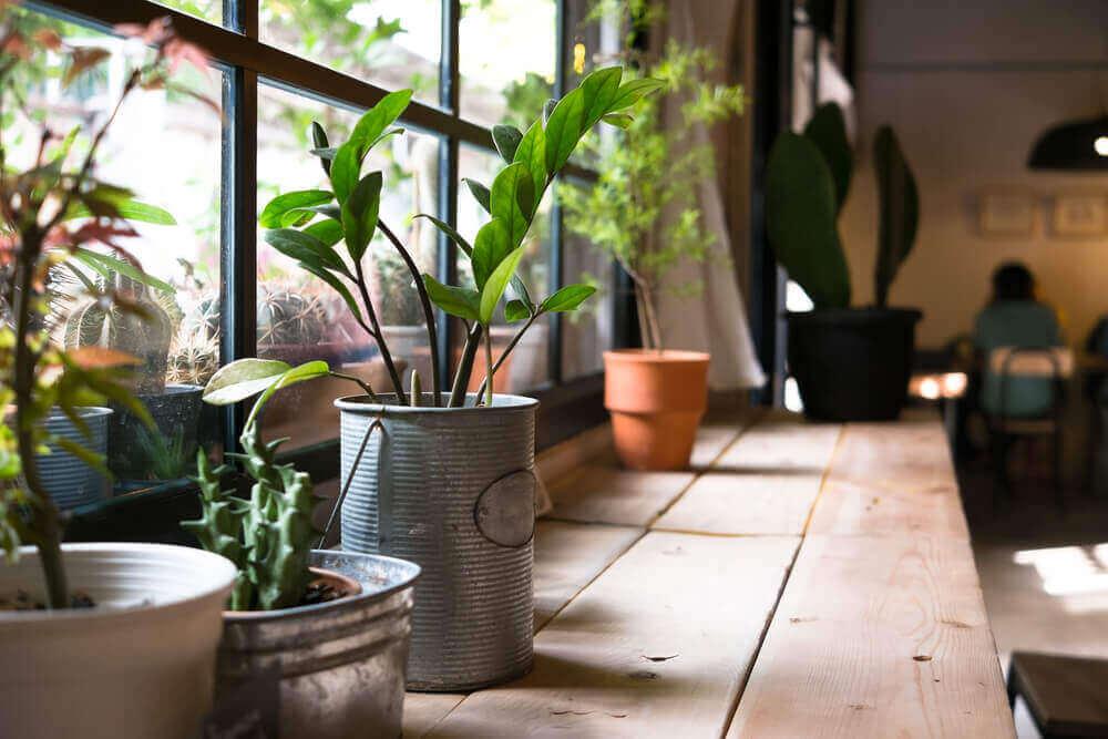 Корисні переваги декоративних рослин в оселі