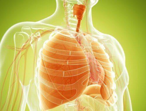 Натуральні засоби, які допоможуть очистити легені