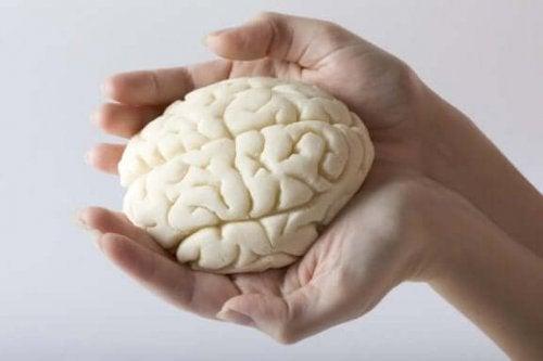 переваги зволоження для мозку