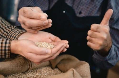 які цілі зерна додати до раціону