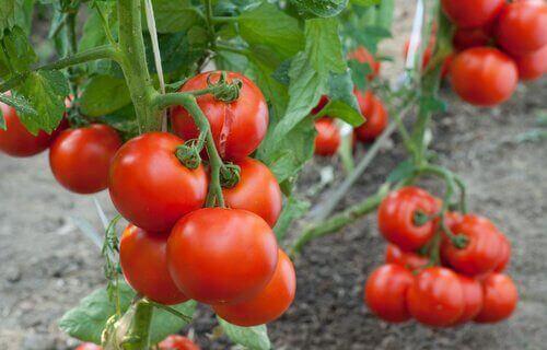 переваги кориці для захисту овочів