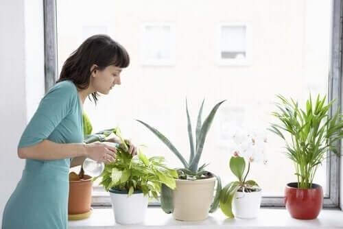 домашні рослини та комахи
