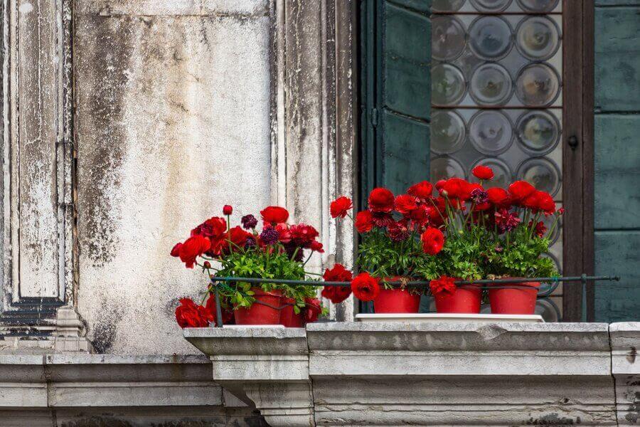 Найкращі види квітів для балкона