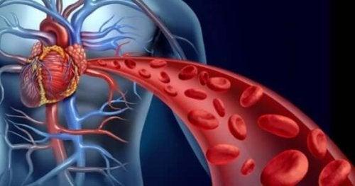 як приготувати куркуму для поліпшення кровообігу