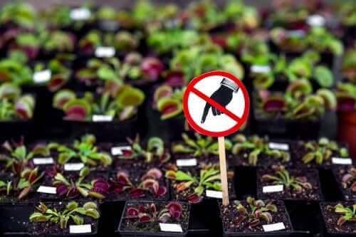 Небезпечні рослини, які ви не повинні мати вдома