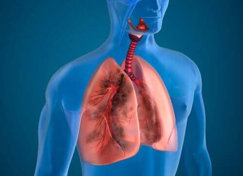 Корисні продукти для покращення роботи легень