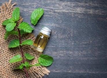 Переваги м'ятної олії для вашого тіла